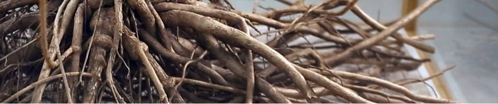 数千年にわたる先人の知恵が蘇る「神聖な植物」